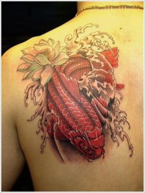 Belles conceptions de tatouage par Koi Fish