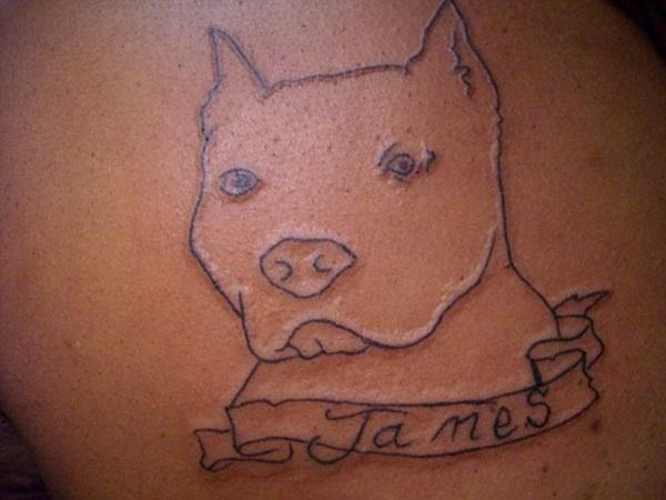 Tatouages Pit Bull et les significations